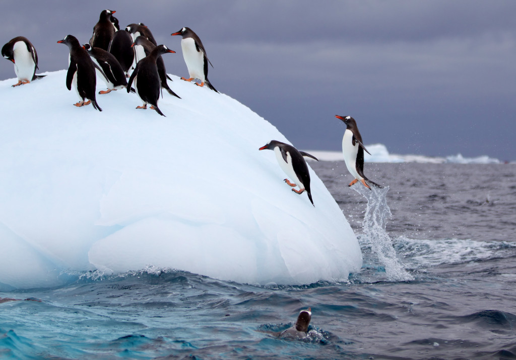 C.AQ.Penguins on Iceberg